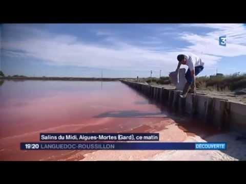 ECLAE - Récolte de la Dunaliella Salina sur le Salin d'Aigues-Mortes - JT 20h France 3