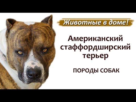 Немецкая овчарка в Москве продажа, цены, фото щенки
