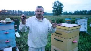 пчелы работают круглосуточно. Пчеловодство. Сергей Толстов советы для начинающих пчеловодов
