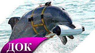 Цивилизация дельфинов. Разумные жители морей. Документальный фильм