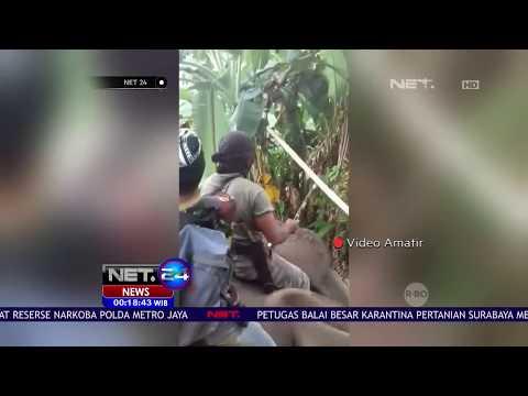 Gajah Masuk Permukiman, Warga Aceh Halau Kawanan Gajah Masuk- NET 5