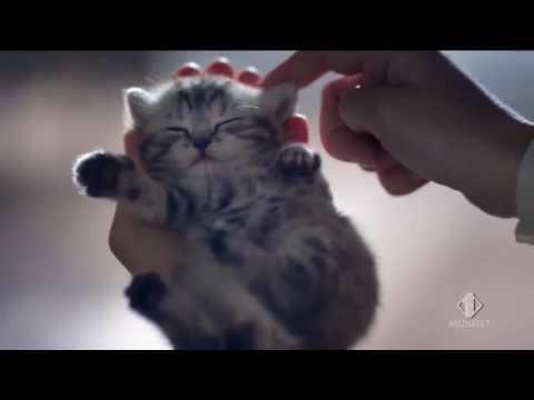 Cuccioli Di Gattini Adorabili Video Belli Di Gatti Youtube