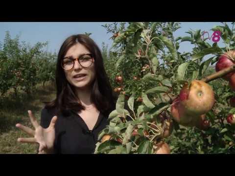 Молдавские фермеры жалуются на потери урожая