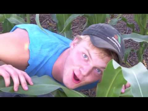 I'm Farming and I Grow It (Parody Song)