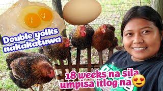 Our first egg🥚 Nag umpisa na😍
