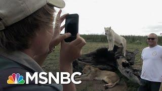 'Blood Lions' Web Extra: Volunteering   MSNBC