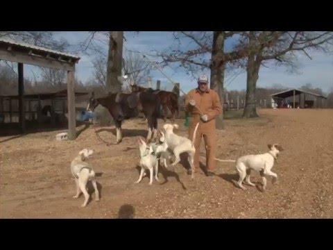 Ferrell Miller Interview With Bird Dogs Afield