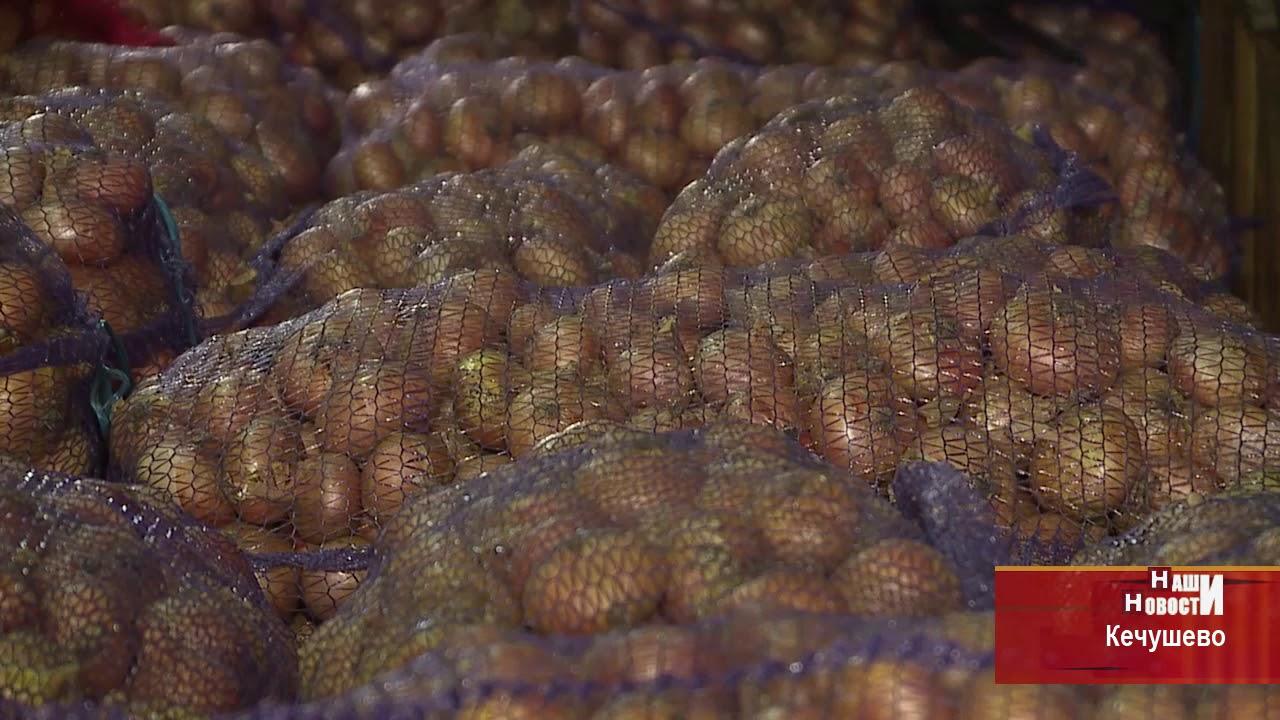 фото репчатого лука