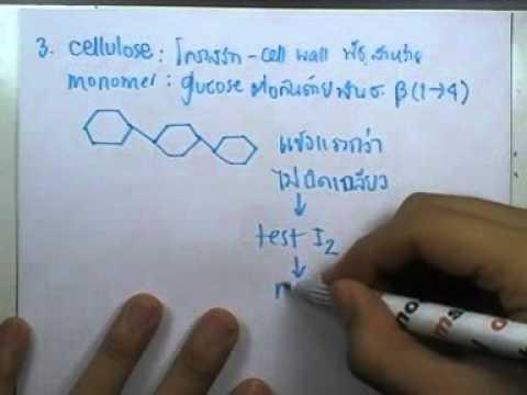 ormBio ver2 : สารชีวโมเลกุลและสารเคมีที่เป็นองค์ประกอบของเซลล์ ตอน02