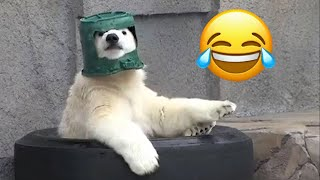 Impossible Try Not To Laugh [ANIMAL EDITION] - Funny Fails