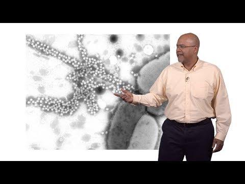 Paul E. Turner (Yale) 2: Virus Adaptation to Environmental Change