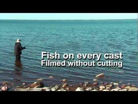 FISH ON EVERY CAST!  WITH FISHING-SPOON 'SMÅLAND' Garfish Needlefish Näbbgädda Horngädda