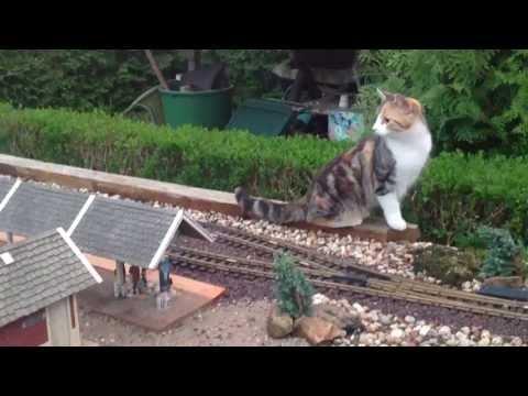 Cats and Trains mal anders Gartenbahn LGB Jens Handro
