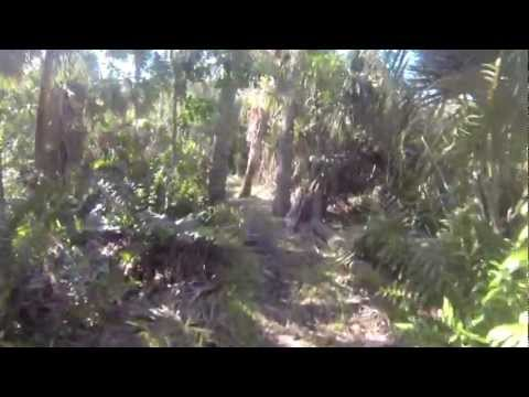 Trail Running Part 1 - Maritime Hammock Sanctuary - Melbourne Beach Florida