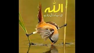 Allah Ki qudrat Ka karishma