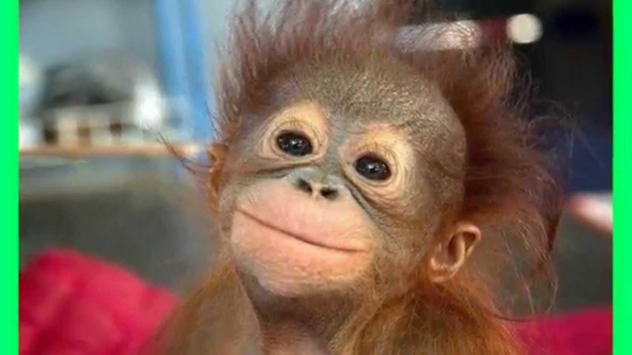 смешные обезьяны. фото