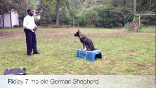 Germand Sheperd Training Norfolk 757-354-3644 Train Your German Shepherd