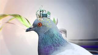Загадка перелетных птиц. Популярная наука с Анной Урманцевой.