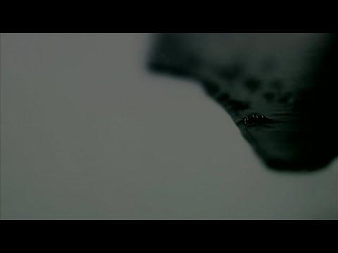 THE BACK HORN「ブラックホールバースデイ」MUSIC VIDEO