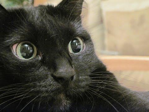 Как разговаривать с кошкой на ее языке