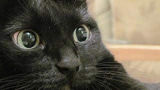 Разговариваю с котом через кошачий разговорник