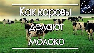 Откуда у коровы молоко | All About