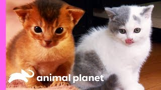 Top 3 Cutest Kitten Moments   Too Cute!