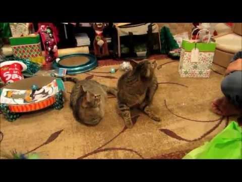 Mercury enjoying Catmas