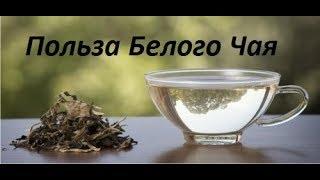 видео Польза белого чая