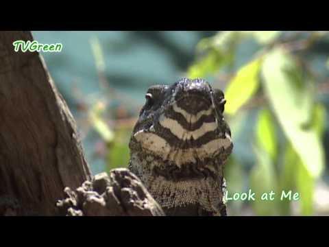 Look at me! Lizard & Dragon