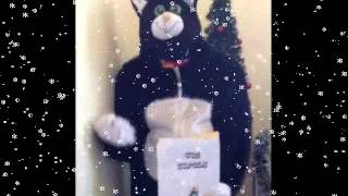 Cat Sings Carols - How Lovely Shines the Morning Star - Cambell Cat