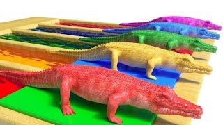 Wild animals and their young are transformed into aquatic animals (part 1) animal sounds