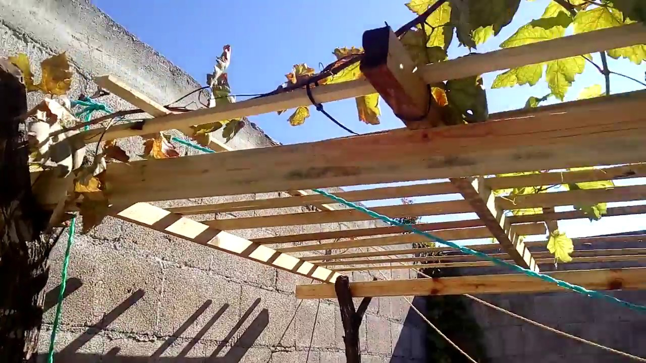 Como cultivar una vid parra o uva construye tipo for Ideas para construir una terraza