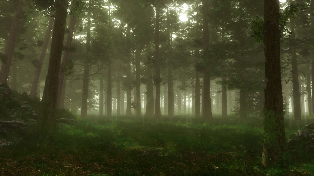 forest sounds woodland ambience