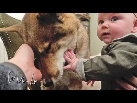 WE LEARNED OUR LESSON + HUGE First for Baby!! | The Miller Life