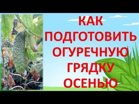 КАК ПОДГОТОВИТЬ 🥒 ОГУРЕЧНУЮ ГРЯДКУ ОСЕНЬЮ. Как выращивать огурцы. Грядка для огурцов.