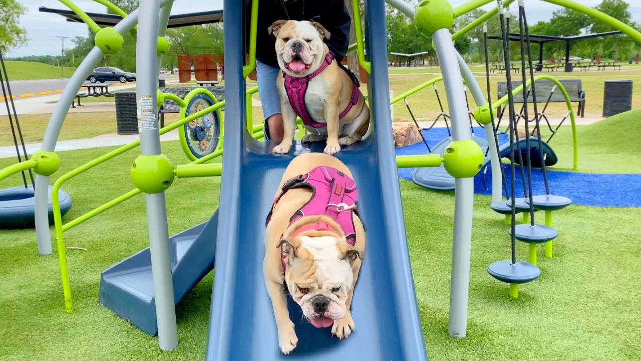 CUTE BULLDOG Goes to the PLAYGROUND PARK!
