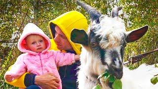 Help Animals Song | Nursery Rhymes & Kids Songs