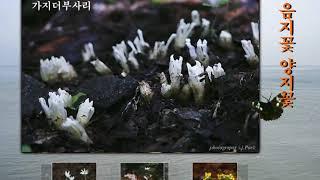 부용의 음지꽃 양지꽃