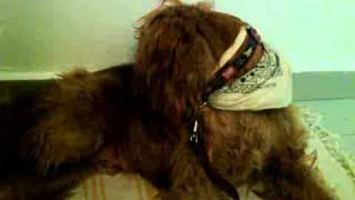 Go Vet - ליקוק כפות רגלים בכלבים