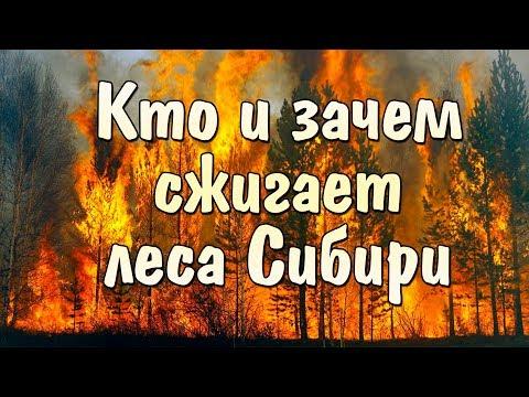 Кто и зачем сжигает леса СИБИРИ | Лесные пожары 2019