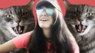 Britney Spears - Womanizer - Acoustic Cover With a Cat - Kartiv2