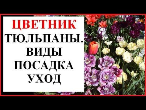 Тюльпаны в саду: виды, посадка, уход