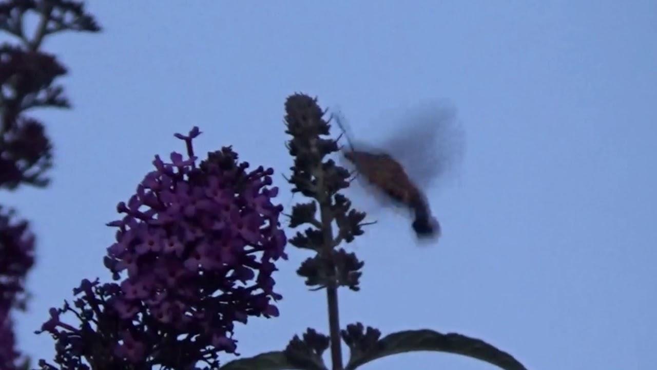d34d019bf Le Paradis des papillons Colilbri - YouTube