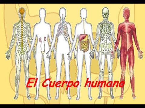 11 SISTEMAS DEL CUERPO HUMANO : DOCUMENTAL COMPLETO | Osgam - YouTube