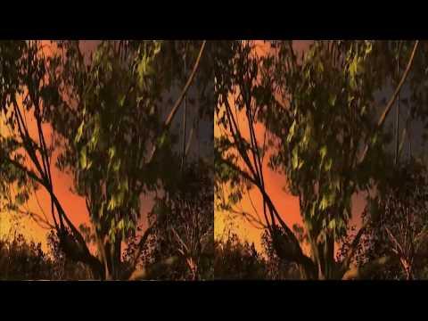 Jungle 3D (SBS/VR) 1080p