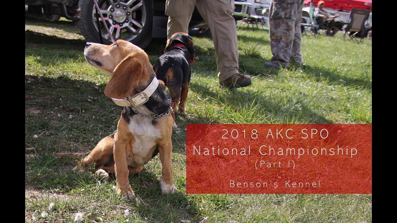 2018 Akc Spo National Championship Part 1 Benson S Kennel