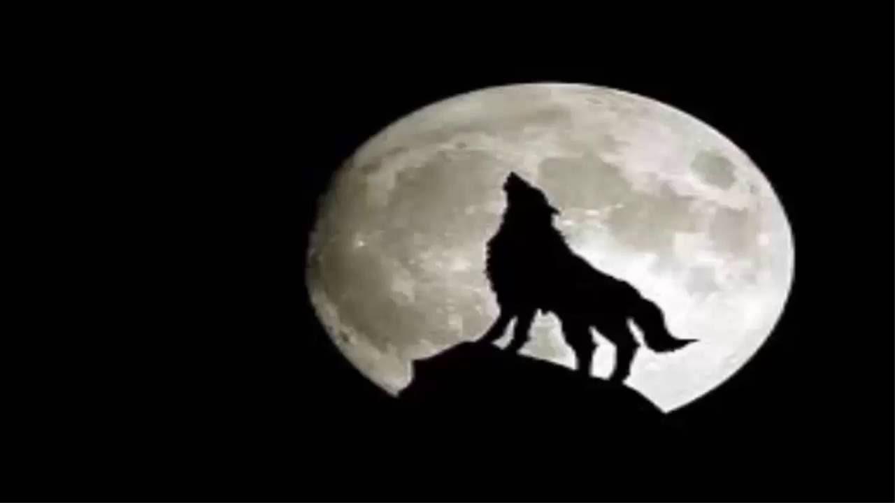 Coyote Moon Slots Free