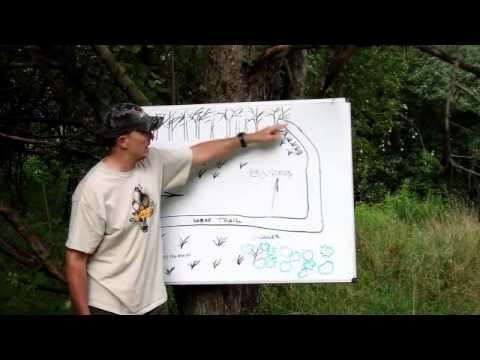 Coyote Hunting Setups