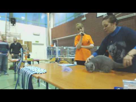 2017.01.14 International Cat Show WCF, Piaseczno (part 2/3)